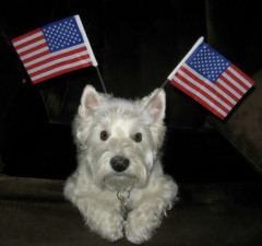 7/12A ~ Riley - Happy 4th of July to all Americans from Your Canadian Friend! (ellenc995) Tags: holiday riley westie westhighlandwhiteterrier 4thofjuly coth supershot akob abigfave citrit pet500 pet100 thesuperbmasterpiece rubyphotographer 100commentgroup alittlebeauty coth5 naturallywonderful thesunshinegroup sunrays5 12monthsfordogs16 challegeclub