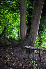 Untitled (Maza Photographie) Tags: wood brown france green abandoned nature forest lost lights chair nikon natural ile exploration couvert emptychair naturallights