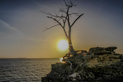 The Tree And The Sun (.Danny.B [Nature Photography]) Tags: ocean new sunset summer hot macro tree nature rock wow lens island photography eos photo team rocks flickr alone sunny explore cannon buy edit died lightroom rebal t5i