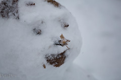 20130120-4235.jpg (peta.ryb) Tags: snow london coffee greenwich january footprints motorbike harleydavidson sledding sledges northgreenwich greenwichpark canningtown o2arena