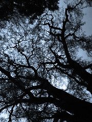 Sleeping under the moon light.. (PhotoScientist) Tags: old trees winter blackandwhite moon tree monochrome field silhouette contrast dark cool mood shadows sad sony silhouettes formation madness horror moonlight pointandshoot backlit mad sonywx50