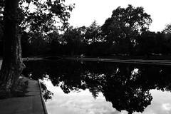 (troublenat) Tags: blackandwhite reflection pool bidwellpark publicpool onemile chicoca canonefs1855mmf3556 eos450d cannoneosrebelxsi