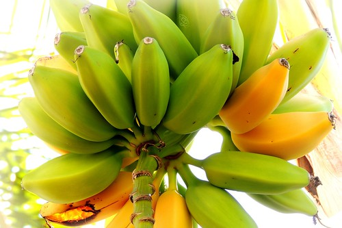 Sweet bananas