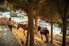 people & animals (Andrea-DiGiangiacomo) Tags: sea beach view country greece land rodhos