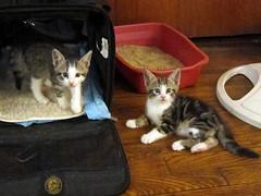 Guyliner and The Cutest Kitten in the World™ (Jimmy Legs) Tags: street cats kittens bushwick bushwickstreetcats