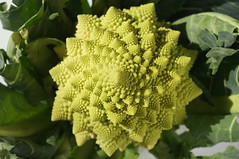 DSC07510 (Shoko H) Tags: green vegetables geometrical broccolo romanesco spiral