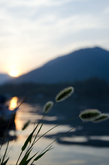 Green Foxtail (Ese-emon) Tags: sunset plants mountain green water seaside nikon dusk mie foxtail fishingport kihoku d7000