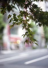 神保町 葉 Chiyoda-ku, Tokyo (ymtrx79g ( Activity stop)) Tags: plant color slr film japan analog tokyo 35mmfilm fujifilm 東京 135 植物 chiyodaku jinbocho jimbocho 神保町 写真 千代田区 銀塩 フィルム fujicast801 fujicolor記録用400 fujifilmfujinonebc55mmf18 201307blog