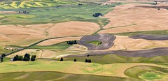. the palouse from steptoe butte . (susanonline (busy these days)) Tags: panorama iceage quilt patterns hills glaciers fields crops patchwork quartzite palouse fertile loess nohorizon steptoebutte susanonline formedbythewind