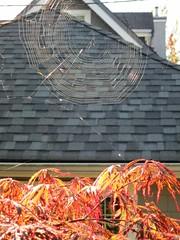 Web and maple (Ruth and Dave) Tags: autumn red orange sun tree fall leaves vancouver evening maple web mountpleasant spiderweb illuminated foliage cobweb lit cutleaf