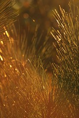 Autumn.6 (TRUDI.) Tags: lighting autumn light sunset hot nature tramonto dof bokeh natura pino aghi sunsetlight autunno trudi luce lucediffusa