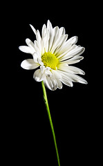. (Ryan Duffy2009) Tags: life flowers stilllife flower color macro canon studio botanical is still usm canondslr ef 28135mm botanicals canonef28135mm canonef28135mmf3556isusm f3556 canon6d