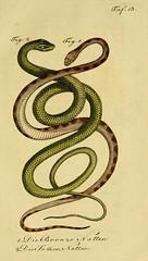 n158_w1150 (BioDivLibrary) Tags: amphibians reptiles harvarduniversitymczernstmayrlibrary bhl:page=5517771 dc:identifier=httpbiodiversitylibraryorgpage5517771