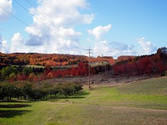 Michigan Fall (Jack Amick) Tags: city fall leaves michigan north traverse peninsula leelanau