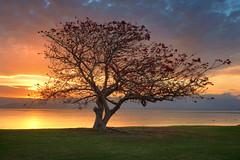 Illawarra Tree (stevoarnold) Tags: new lake tree wales photoshop exposure south australia nsw manual hdr blending illawarra