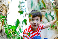 Harel (Ran Z) Tags: boy portrait playing tree smile leaves happy kid play climbing modelrelease nikon85mmf14d nikond800e vision:people=099 vision:face=099 vision:outdoor=0708 ranzisovitch
