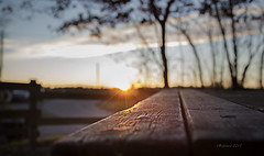 Winter sun (Soloross) Tags: