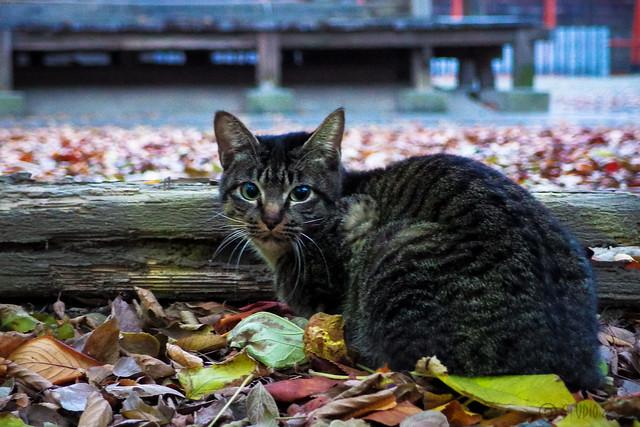 Today's Cat@2013-12-06