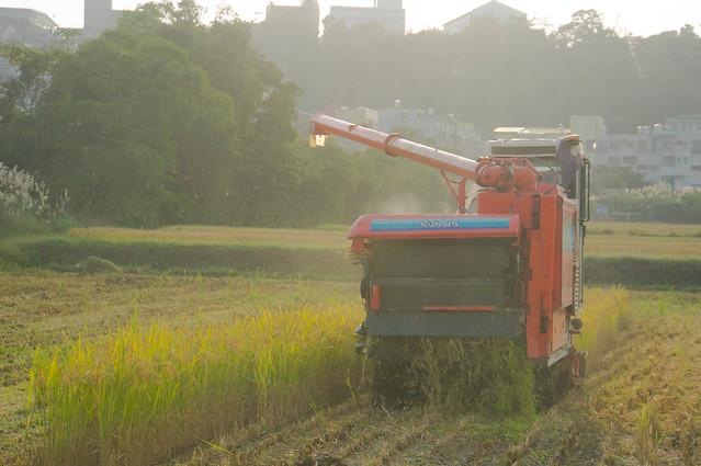 rice-06602.jpg