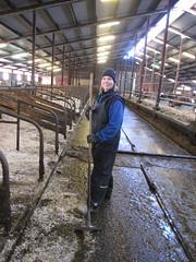 Farmgirl milking (FarmNor) Tags: barn cow farm rubber apron parlour dairy stable milking coverall kor bonde farmgirl melking ladugrd mjlka bondgrd lantbruk galonbyxor lypsy djursktare galonklder mjlkgrd avbytare mjlkgrop