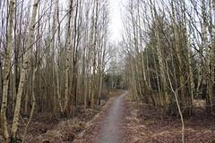 Birkenwald auf Styrsö