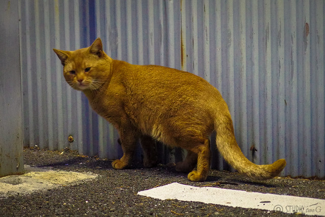 Today's Cat@2014-01-07