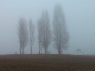 Vanier Park Fog Blanket #5245