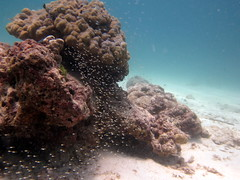 IMG_9057 (milewski) Tags: ocean water underwater salt scuba diving scubadiving saltwater underwaterphotography oceanphotography