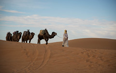 Morocco (weiskom) Tags: man desert earlymorning morocco daytime camels nikond800