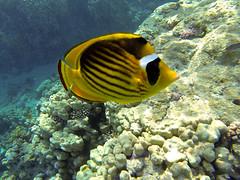 KW2 ({keith}) Tags: redsea scuba sharm 2014 gopro