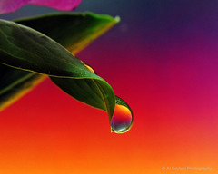 Vibrance (uvaisjm - Al Seylani Photography) Tags: macro colors closeup refraction waterdrops