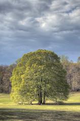 Caumsett State Park (milfodd) Tags: tree nature may longisland northshore hdr 2014 suffolkcounty caumsettstatepark lloydneck