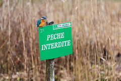 Faire des photos (Pap_aH) Tags: france bird animal citadel north kingfisher lille oiseau nord boisdeboulogne citadelle 2015 martinpecheur papah