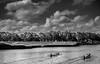 Rowing (reinomac) Tags: leica me 50mm summicron rowing