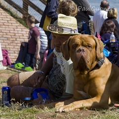 You looking at me?????? (paulquance) Tags: red sea portrait dog holiday colour seaside devon arrows british warren spectator raf dawlish rafredarrows facesofportraits faceofportraits