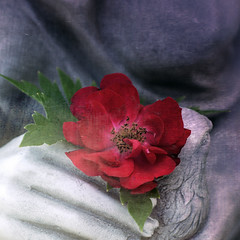 two-fourteen-fifteen (anniedaisybaby) Tags: red texture love rose statue thankyou friendship jenny persephone valentinesday february14 2015