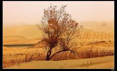 nEO_IMG_IMG_0446 (c0466art) Tags: trip travel light beautiful canon landscape photo big sand scenery pattern desert south wide chinese  2012  5d2 c0466art