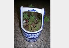 Cactus-Tillandsia-11 (cuirung) Tags: jade gollum haworthia airplant crassula felina faucaria perforata tigerjaw cactustillandsia bulbbolsa