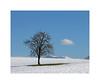 Happy (Brulama) Tags: france soleil neige nuage simple arbre champ pommier hautesavoie chablais cumulushumilis plateaudegavot chapelledechampeillant