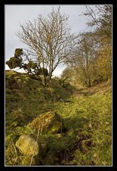 Small Cutting (K-Burn) Tags: trees rock fife cutting dismantledrailway fieldabandoned waltonhill chanceinn cultsbranchrailway