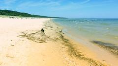 Crow on a hill on the beach (piropiro3) Tags: sea beach strand meer balticsea crow ostsee usedom krhe karlshagen