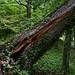broke tree