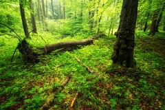 Am Straenrand wartet das Wunder (Gruenewiese86) Tags: nature fog forest canon landscape nationalpark nebel natur mystical tamron landschaft wald harz haida 1530 polfilter bodetal wlder forestscape wlder