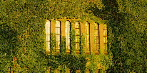 "Sunlit Ivy Wall • <a style=""font-size:0.8em;"" href=""http://www.flickr.com/photos/52364684@N03/26922903164/"" target=""_blank"">View on Flickr</a>"