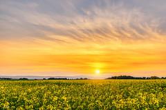 Colza (Stphane Slo) Tags: sunset france reflection clouds landscape eau pentax hiver nuages paysage reflexion hdr coucherdesoleil sane pentaxk3ii