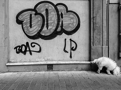 Untitled. (cesare1942) Tags: graffiti persone varie ricercapersonale