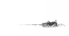 A l'afft (Mathieu Thiebaut | http://www.mathieuthiebaut.com) Tags: blackandwhite bw monochrome animal noiretblanc reptile sony nb iguana highkey iguane lezard lightroom iguanaiguana alpha99 a99 iguanevert