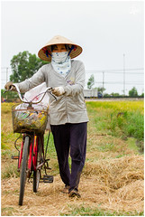 L  A (tannguyendp) Tags: travel green nature asian typography women rice farm labor tan gio vietnam retouch ourdoor quehuong tannguyen tannguyendp