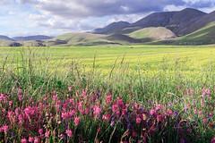 Landscape (dolcedgiorno) Tags: italy nature landscape altopiano umbria castelluccio sibillini