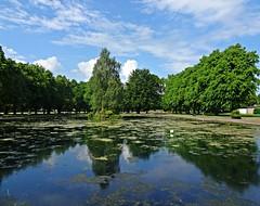 Slime Wave (Bricheno) Tags: park reflections scotland pond escocia szkocja renfrew schottland robertsonpark scozia cosse  esccia   bricheno scoia
